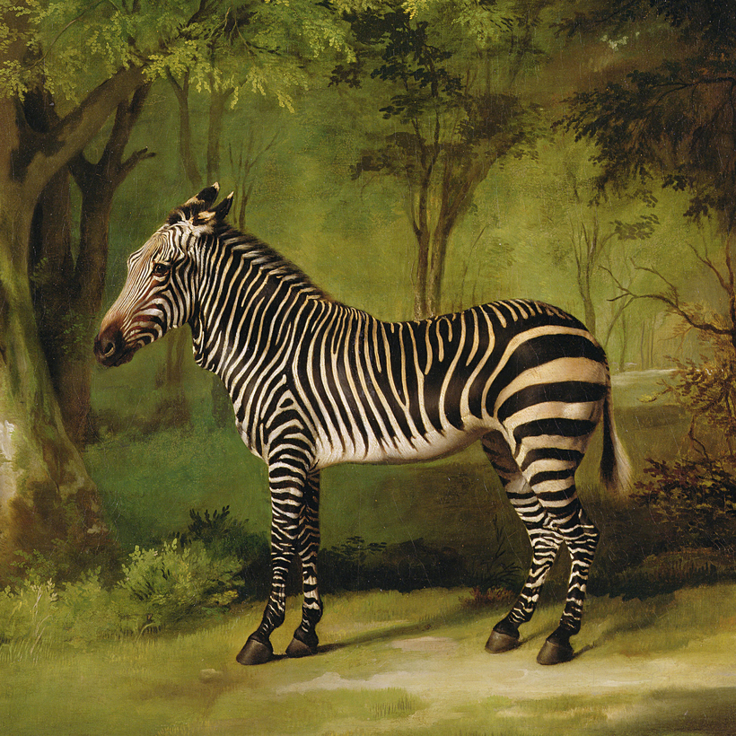 A Zebra, by George Stubbs, 1763, oil on canvas.